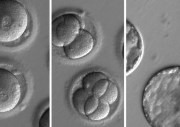 British scientists 'create sperm from stem cells'