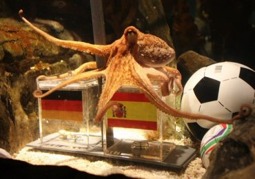 An Octopus predictions of world cup football