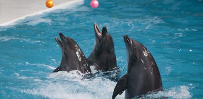 Dolphin Love Atlantis Dubai