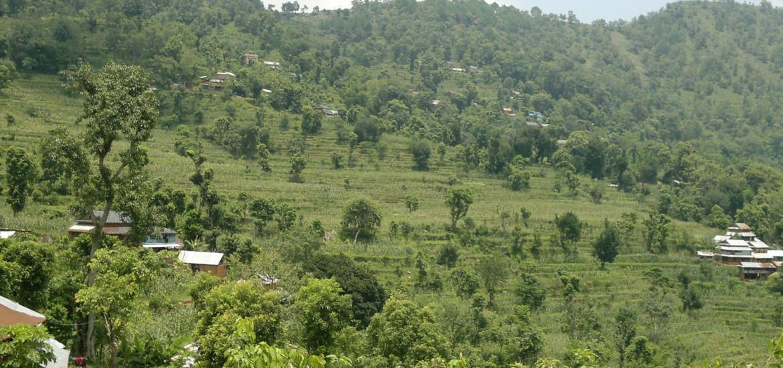 Green Jyamrung