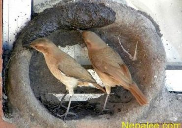 Creative Nest building Pictures