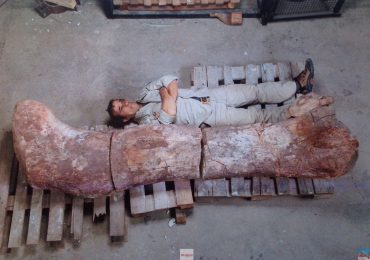 World's biggest dinosaur fossil discovered in Argentina
