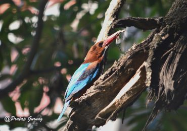 Birding around Kathmandu Valley