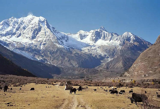 Vast Grassland on the Manaslu Region