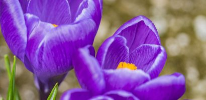 30 Most loved Flowers By Honey Bees