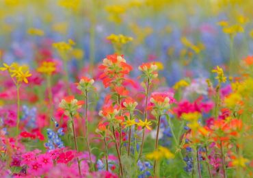 30 Most Beautiful Wild Flowers that love by Bees