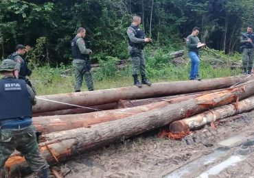 Deforestation in the Amazon is accelerating even in lock-down